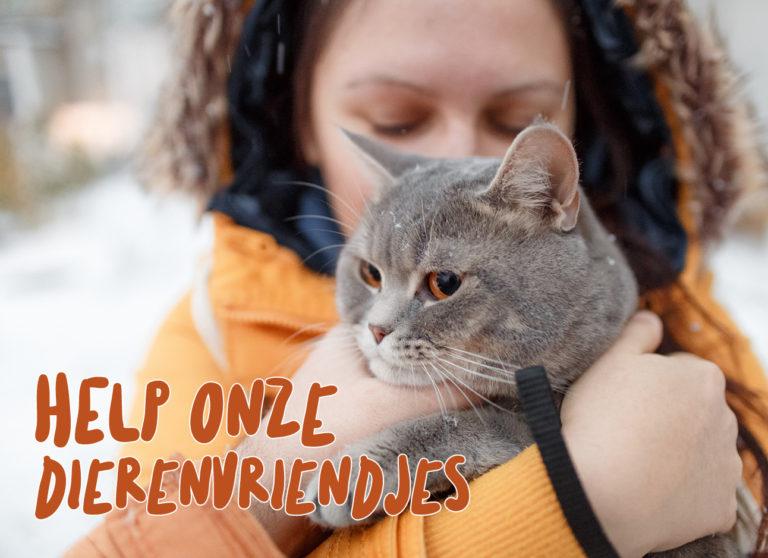 Draag dit jaar je steentje bij en help de zwerfkatten in Nederland